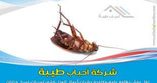 شركة مكافحة الصراصير بالمدينة المنورة 0557763091