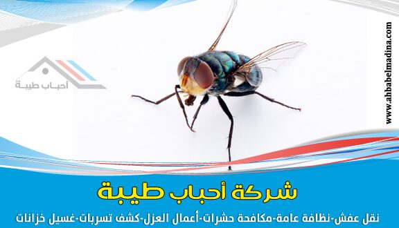 شركة مكافحة الذباب بالمدينة المنورة 0557763091