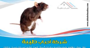 شركة مكافحة فئران بالمدينة المنورة 0557763091