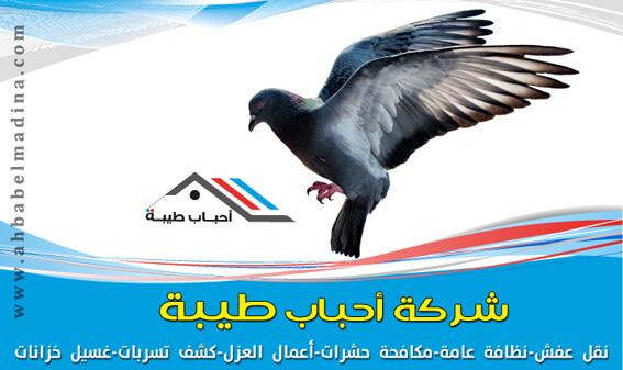شركة تركيب طارد الحمام والطيور بالمدينة المنورة و ينبع 0557763091