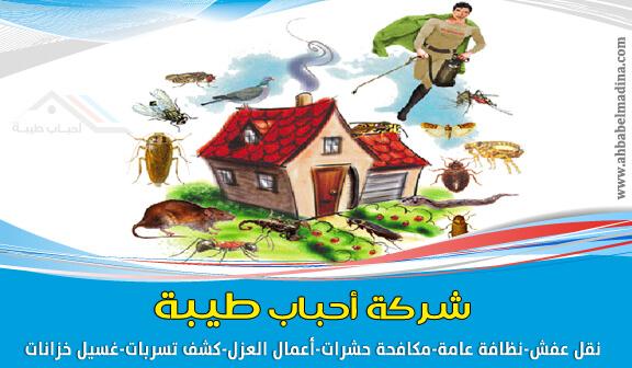 مكافحة حشرات بالمدينة المنورة 0557763091 مكافحة انواع الحشرات