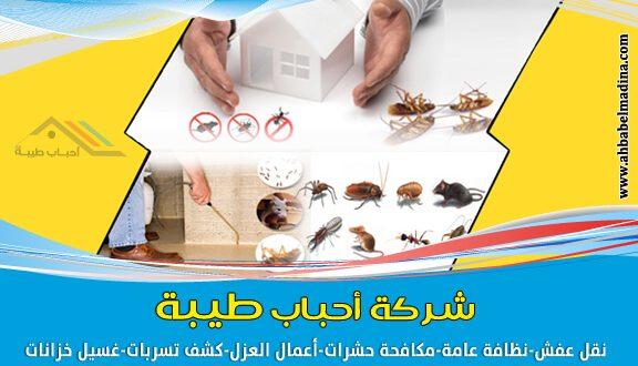 شركة رش حشرات بالمدينة المنورة شركة رقم (1) في المدينة المنورة وينبع