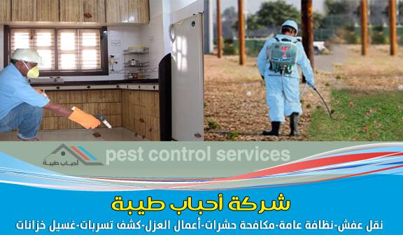 شركة مكافحة الحشرات بالظهران ورش المبيدات