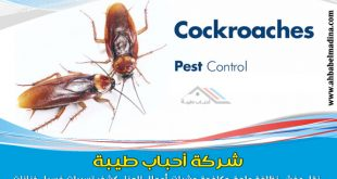 شركة مكافحة الصراصير بجدة ورش صراصير بمبيدات فعالة