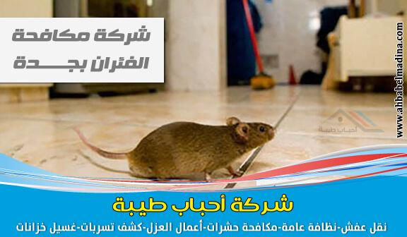 افضل شركة مكافحة الفئران بجدة