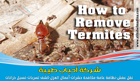 شركة مكافحة النمل الابيض بجدة ومكافحة النمل قبل البناء